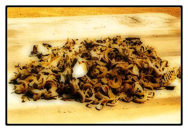ปลูกผัก สวนครัว ด้วยปุ๋ยอินทรีย์ แบบ เกษตรอินทรีย์