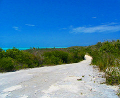 All roads lead to ??? (Tabbie-cats) Tags: ocean road blue trees sea vacation sky color green beach nature water canon wow island intense paradise turquoise vivid bahamas emerald normanscay macduffs
