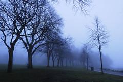 Misty Walk (esoteRIKphoto) Tags: vancouver nikon naturallight stanleypark d200 rik esoterikphoto