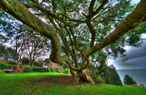 021307 Nothe Tree