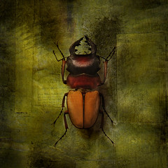 Creepy crawly (IrenaS) Tags: texture photoshop bug insect bravo beetle scarab artlibre