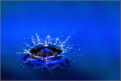 Splash (aumbody images) Tags: blue light color colour macro reflection water closeup drops bravo searchthebest quality australia melbourne victoria drop kitchensink tamron90mm 30d fooddye spalsh lazysundayafternoon magicdonkey outstandingshots aumbodyimages abigfave artlibre flickrplatinum superbmasterpiece beyondexcellence tryingnewstuff bratanesque thepinnaclehof tphofweek93