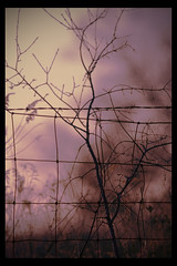 Branch on purple