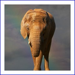 Nellie the Elephant (Heaven`s Gate (John)) Tags: africa vacation elephant nature ilovenature tanzania safari serengeti wrinkles tarangire wildanimals gamereserve 25faves johndalkin heavensgatejohn impressedbeauty