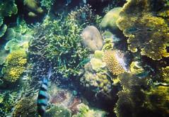Coral Contrast