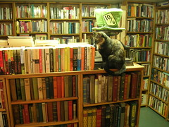 Bookstore cat at Ophelias Books (brewbooks) Tags: seattle buch washington boek chat libro books fremont bookstore secondhand bookshop livre livres bookstores libreria librairie buchhandlung  kitap  kitabevi   librerias sch opheliasbooks  thecatwhoturnedonandoff   hiusach