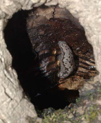 treehole2