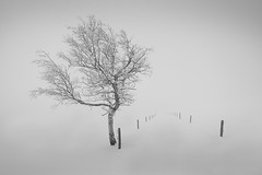 Wie ich Bäume fotografiere