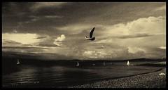 (andrewlee1967) Tags: uk england blackandwhite bw monochrome landscape mono seaside gull lancashire morecambe andrewlee andrewlee1967 andylee1967 focusman5