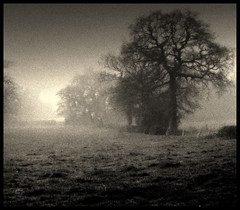 Morning Mist (andrewlee1967) Tags: uk morning trees england blackandwhite bw monochrome misty landscape mono andrewlee verygrainy canon400d andrewlee1967 sonoisymyearshurt andylee1967 thegoldenmermaid focusman5