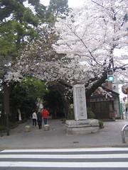 Kuhombutsu Sakura