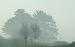 Trees in Trees (Bernie Goldbach) Tags: ireland fog s7000 irishtypepad underway countytipperary