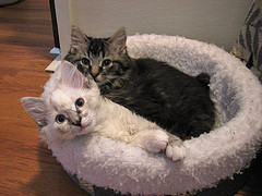 Mungo&Lilly (dacardoso) Tags: cat kitten