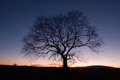 Lone Tree at sunset (tomgardner) Tags: sunset tree scotland aberdeenshire lone