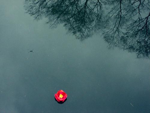 Fotografía de una pequeña flor roja en un estanque azulado en el que se reflejan las copas de algunos árboles