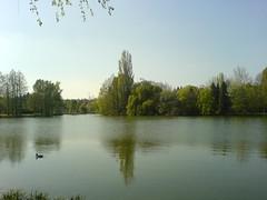 Csónakázó-tó, Szombathely, Hungary (ssshiny) Tags: trees nature spring pond hungary természet tó tavasz magyarország thebigone szombathely fák 230countrieshungary