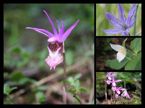 Mill Hill Wildflowers
