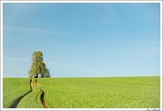Spring Field (schmilar77) Tags: tree field landscape spring bravo feld sigma landschaft baum frühling sigma1850mmf3556dc 123faves 5for2 superbmasterpiece beyondexcellence treesubject