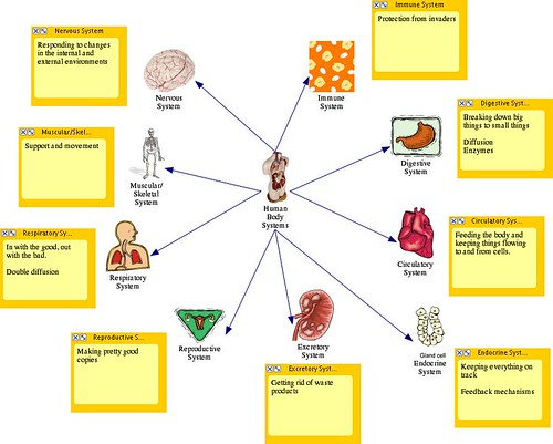 diagrams of human body. Diagram for our human body