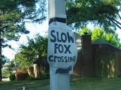 P4160181 (tbertor1) Tags: crossing tulio flox bertorini