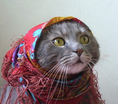 Granny (Kettukusu) Tags: pet cute scarf cat hilarious funny humorous comic lustig haha amusing granny  comical entertaining rolig laughable lohi hauska cc300 colorphotoaward lmaoanimalphotoaward pet100 baabushka 75faves lystiks huvittava viihdyttv