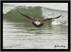 This wave is mine!!  Vou pegar uma onda!!