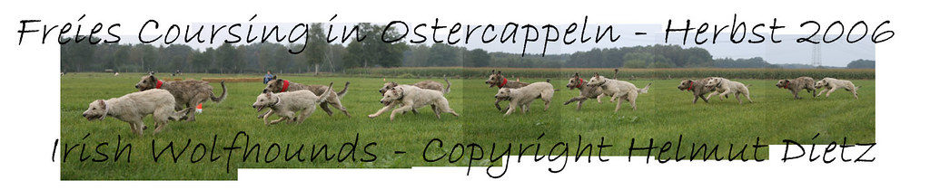 Irish Wolfhound Collage Coursing 2006