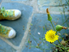 (heffy88) Tags: flower yellow shoes perspective depthoffield