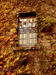 Emprisonn dans une mort magnifique (Sabby3000) Tags: red orange brown toronto reflection brick green window glass leaves wall climb leaf iron branch sill branches wroughtiron masonry vine 2006 grill twig sonydscs40 twigs windowsill driedleaves colourartaward sabrinamaephotography