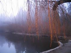 Lost Lagoon - Creepy Tree