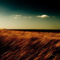 the wind's song (ambientlight) Tags: sky grass clouds open wind ambientlight australia plains thewind definingmoments ambientlightgroup markjamesgaylard