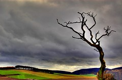 Wizened Tree - Rural View (Magdalen Green Photography) Tags: tree green nature rural scotland dundee scottish vista iain tayside hdr wizened colorphotoaward