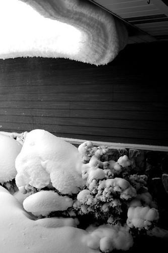 blizzard 017 copy