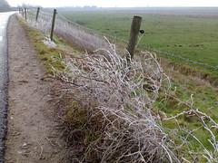 Ochtendwandeling (Stefan van Lierop's Moblog) Tags: winter moblog dijk westervoort