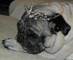 Princess Pug in Repose - by KaroliK