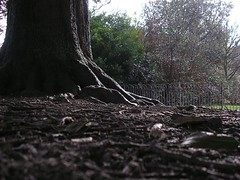 Ground work (Elsie esq.) Tags: park wood tree brighton ground bole