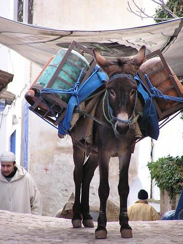 Burro, Morocco