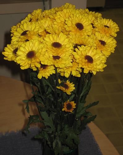 V-Day Daisys