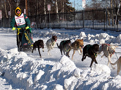 world championship sled dog race 4
