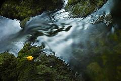 Forgotten Leaf (nailbender) Tags: fall nature water yellow river leaf moss bravo rocks solitude forgotten nantahala nailbender jdmckinnon