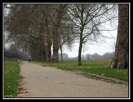 Tree-Lined Edge of Hyde Park