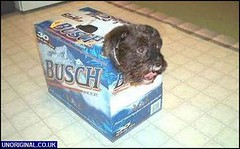 Dog in a Beer Box