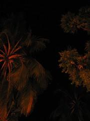a tropical Palawan night (permanently scatterbrained) Tags: travel island southeastasia philippines pi backpacking pinay pinoy visayas palawan thephilippines miniloc philippineislands