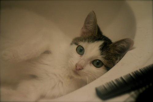 gunther in the sink and a comb.