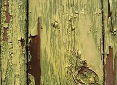 green - by tashland