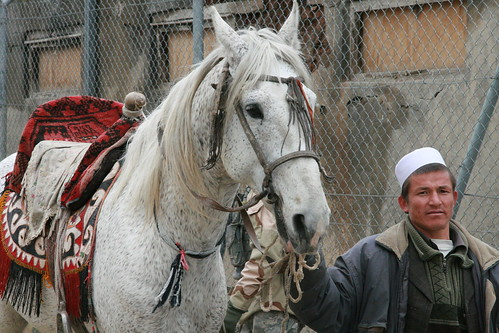 Buzkashi Mount - White spotted