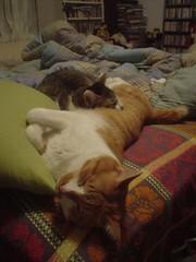 [柳丁] 你是我的抱枕 (8)