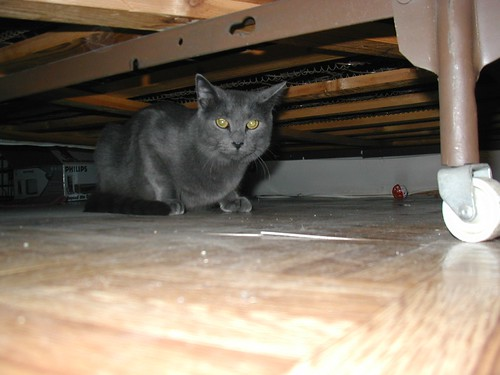 Dru, hiding under the bed.