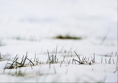 (Rn) Tags: white snow green grass iceland 2007 rn magnsdttir rnmagnsdttir ranmagnusdottir