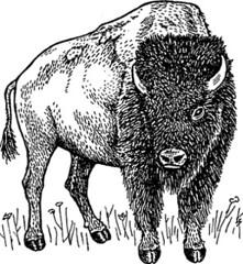 buffalo.gif